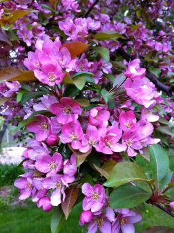 Nature Classroom flower